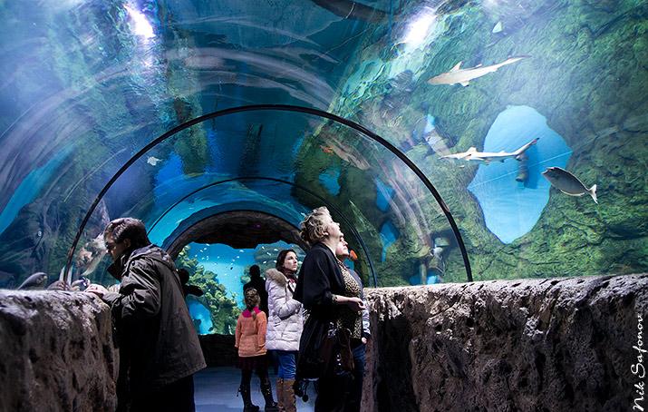 Цена билетов в океанариум Москвариум на ВДНХ в Москве